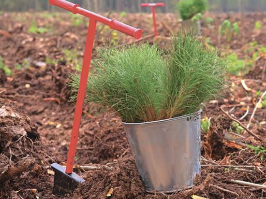 Министр экологии посадил 30-миллионное дерево