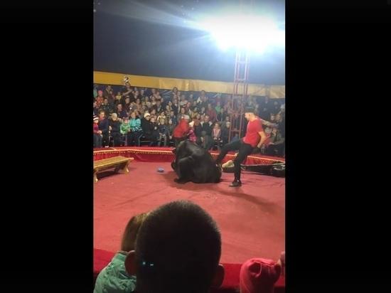 Соцсети: в Карелии медведь напал на дрессировщика на цирковом представлении