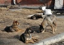Собаки в Краснокаменске нашли конечность, о ее принадлежности идут споры