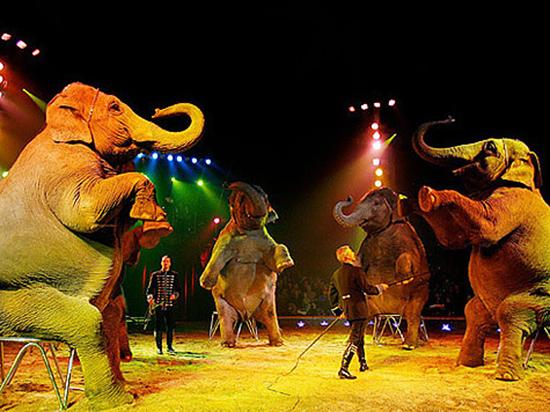 Русский след в Лондоне ведет в цирк