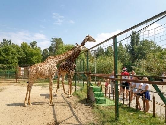 Владелец «Сафари-парка» заявил, что готов отдать зоопарк администрации