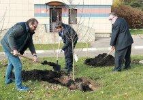 Губернатор Дюмин подарил МГИМО 60 яснополянских яблонь