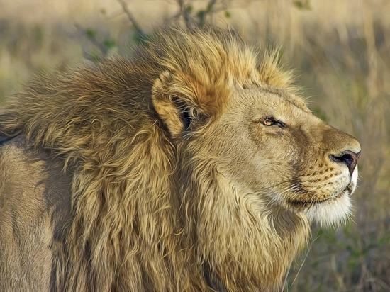 Экс-футболист сборной России рассказал, как Ходорковский убил льва
