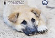 Ярославский приют для собак получит грант на стерилизацию собак.