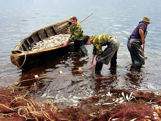 Рыбачка из Бурятии: «Омуль пропал в одночасье, когда пришли другие лодки и другие люди»