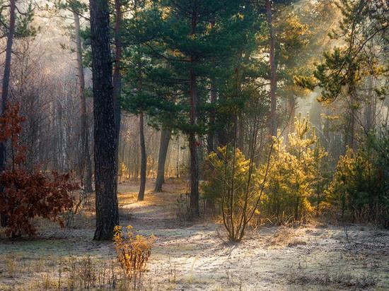 Архангельская область: мороз крепче – солнца больше