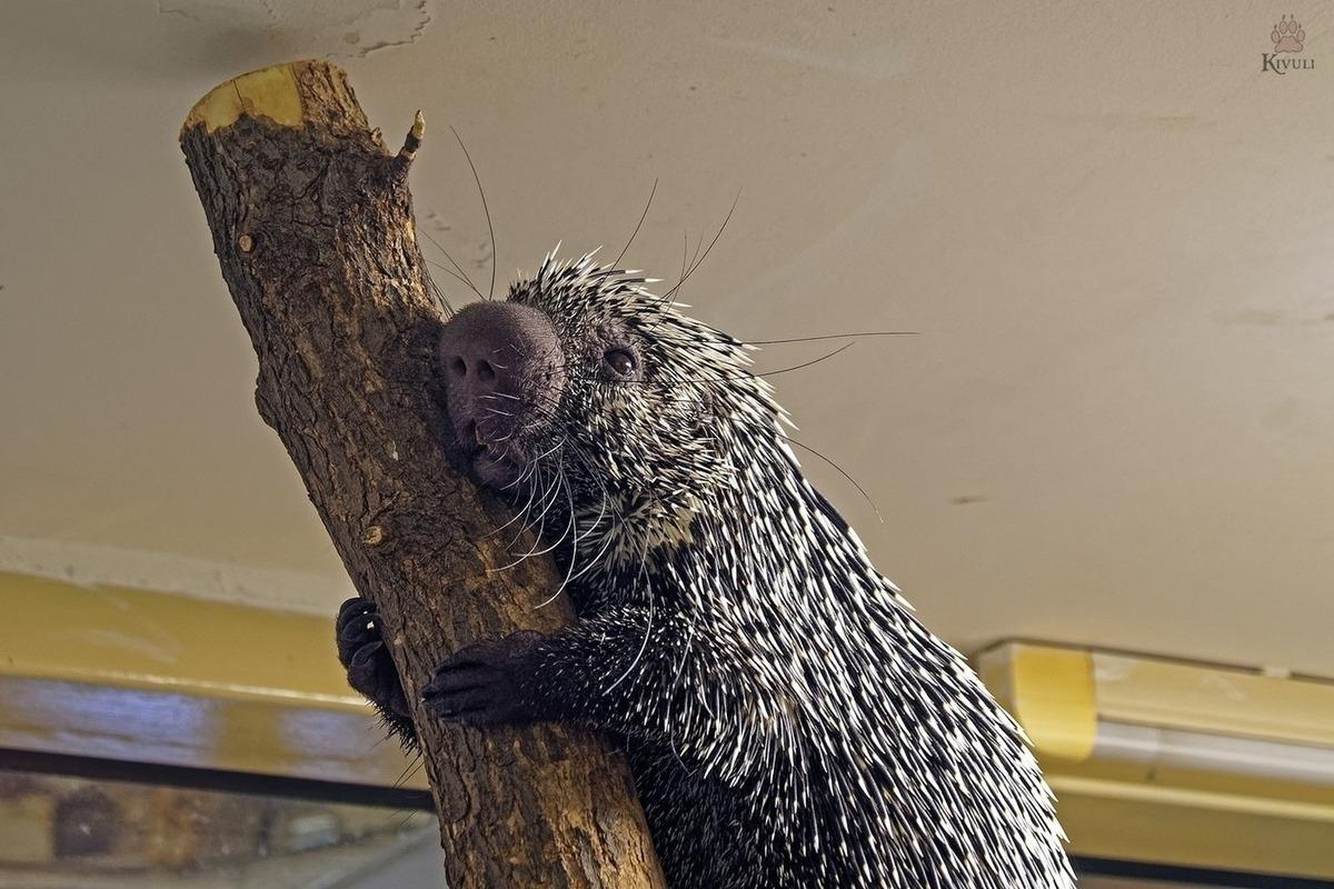 Открытки новосибирский зоопарк