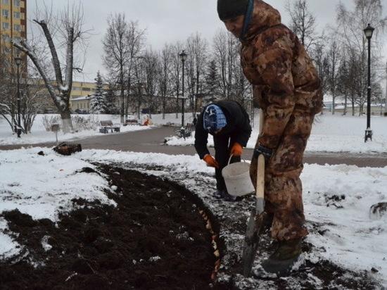Выпал снег – в Иванове сажают тюльпаны