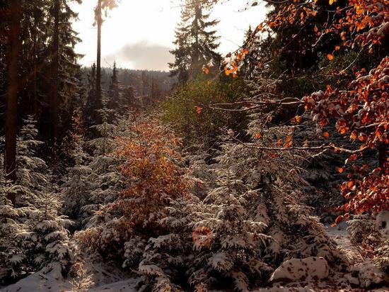 Мороз в Архангельской области будет крепчать