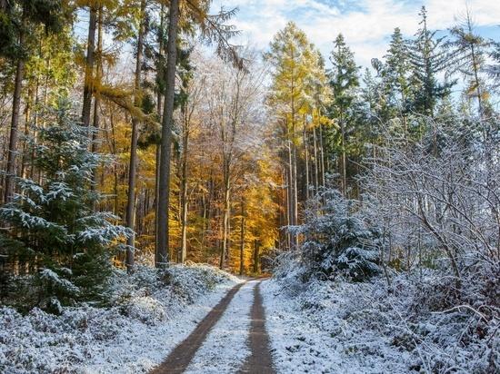Пенсионер, сгинувший в лесу под Вельском, найден мёртвым