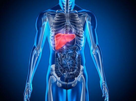 Найден способ лечения цирроза печени и фиброза легких