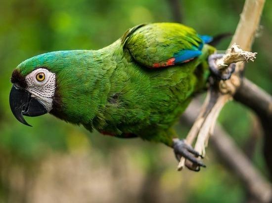 Советы  по уходу за попугаями дали волгоградцам