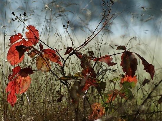 До 12 градусов тепла ожидается 3 ноября в Забайкалье