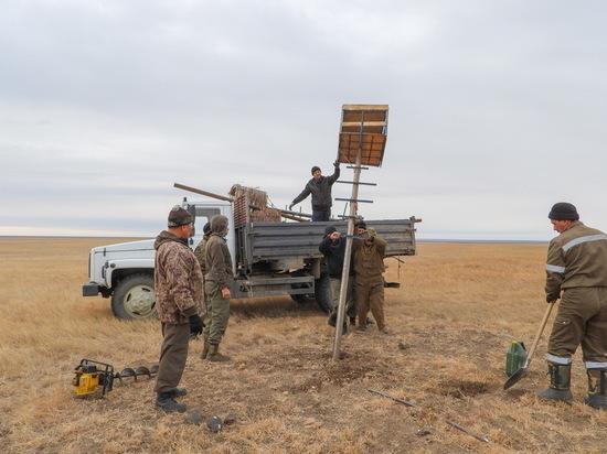 В Даурском заповеднике создали 10 новых квартир для редких птиц
