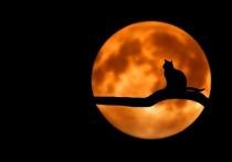 Первая тульская музейная кошка сегодня пройдет имянаречение