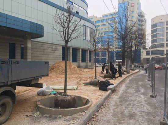 В Калуге начали сажать деревья по московской технологии