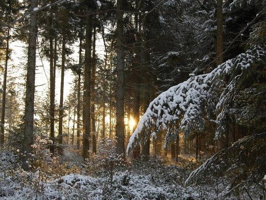 Север морозит, юг заваливает снегом – в Архангельской области очередная свистопляска