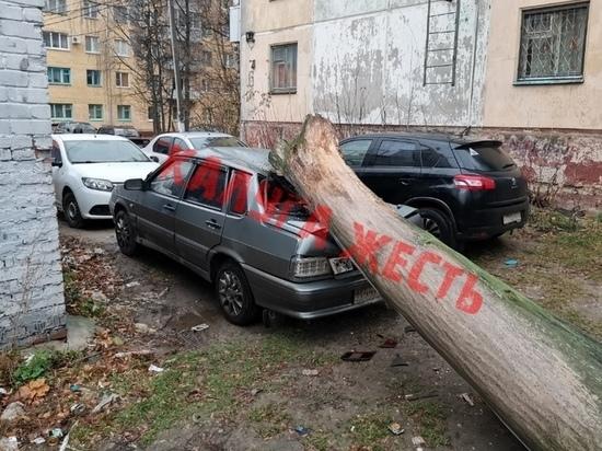 Рухнувшее дерево раздавило машину в центре Калуги