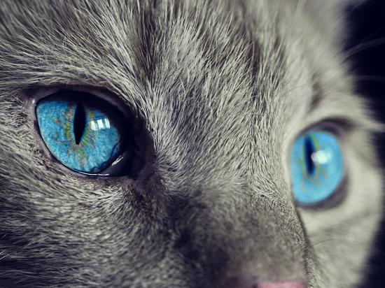 «Кошке-наркокурьеру» из Татарстана ищут новых хозяев