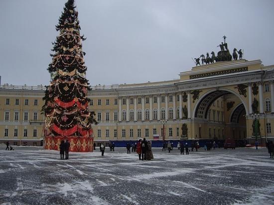 Власти Петербурга решили вернуть на Дворцовую живую новогоднюю ель