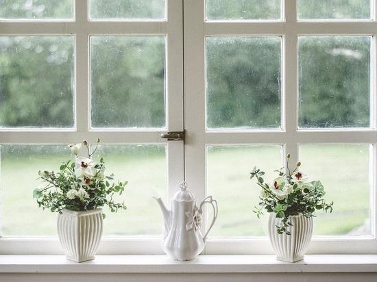 Развеян миф о комнатных растениях: не очищают воздух