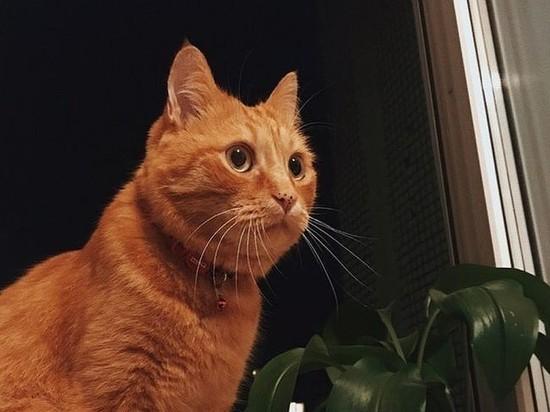 Смерть новосибирского кота обсудят в Госдуме