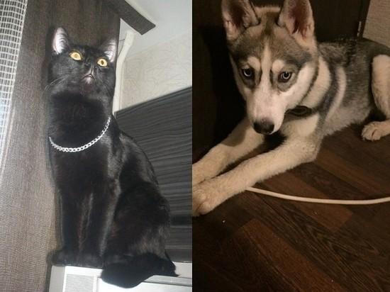 Кот чуть не убил щенка во время игры в Барнауле