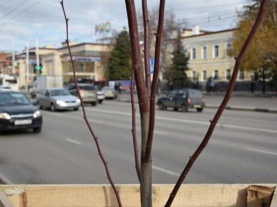 В Тамбове проверят деревья на сопротивляемость реагентам