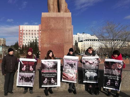 Зоозащитники начали сбор подписей против жестокости к животным в Чите
