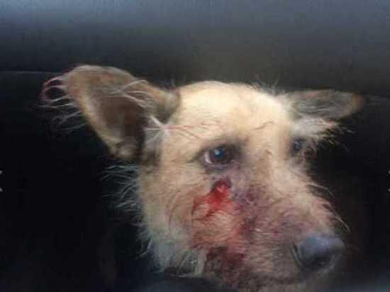 В Хакасии дачник прострелил голову соседскому псу Яшке