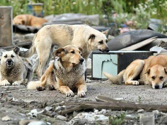Названы районы Читы, где больше всего бездомных собак