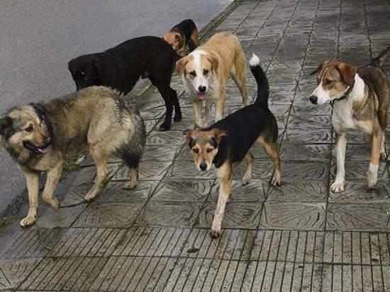 Следователи ищут виновных в нападении собак на ребенка в Черемушках