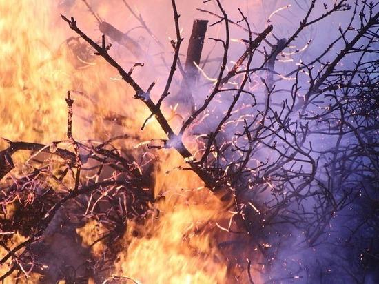 Лесной пожар в районе Планческой Щели чуть не дошёл до турбаз: глава района просит волонтёров о помощи