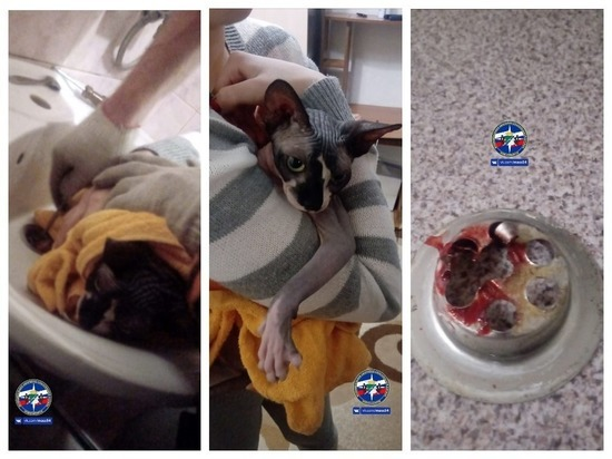 Новосибирские спасатели вытащили из раковины страшного котика