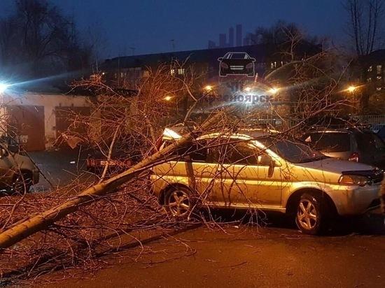 Ветер повалил дерево на автомобиль на Свободном