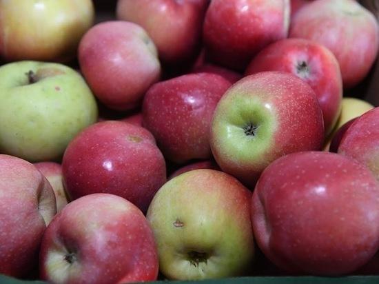 Названы 5 главных причин, почему есть яблоки полезно каждый день
