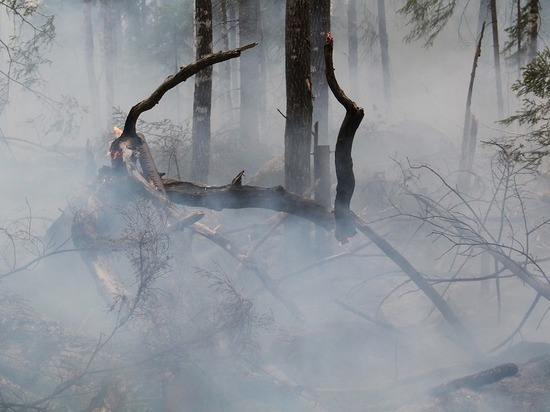 Близ Планческой щели обнаружен новый очаг лесного пожара
