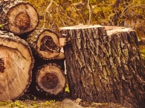 Группу забайкальцев задержали за вырубку сосен почти на 400 тыс рублей