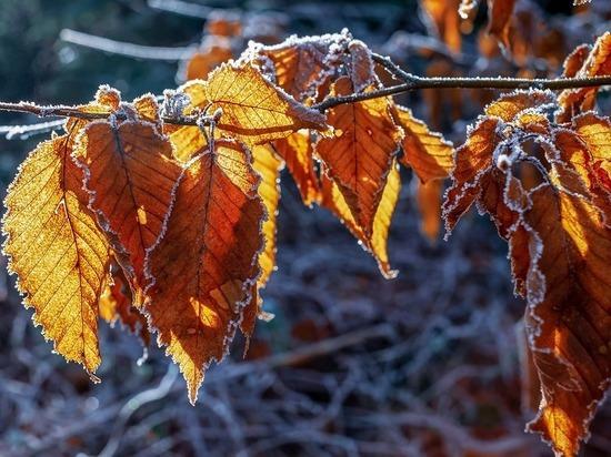 На Волгоградскую область опускаются морозы
