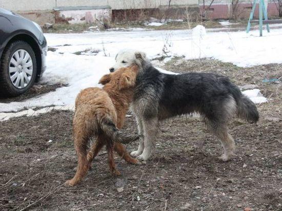 В Чистопольском районе выявлен случай заражения бешенством