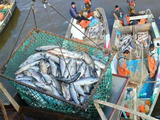 Амур исследуют из-за недолова рыбы после паводка в Хабаровском крае