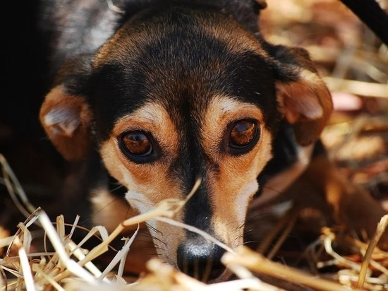 Забайкалью надо 60 млн рублей на 10 приютов для животных