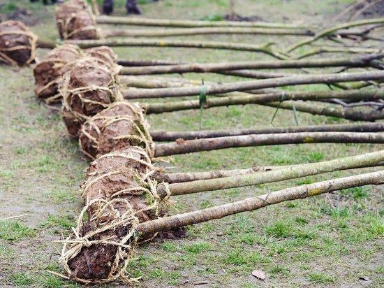 В Новосибирской области у садовода украли эксклюзивные саженцы