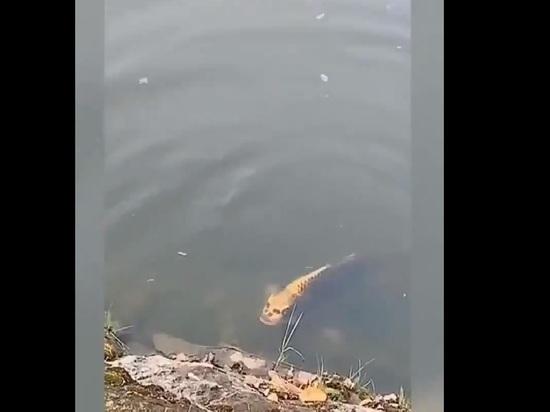 Рыба с лицом человека напугала пользователей Сети