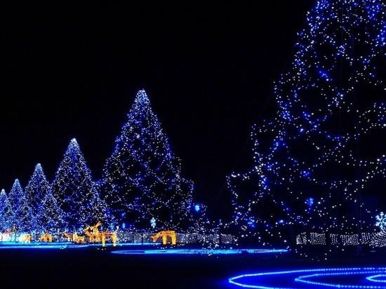 Скоро будет елка: власти Новосибирска заказали главные елки города