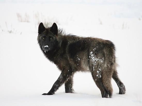 В Башкирии стаи бродячих псов терроризируют местных жителей