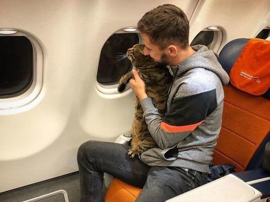 Взвешивание питомцев авиапассажиров потребовали отменить после скандала с толстым котом