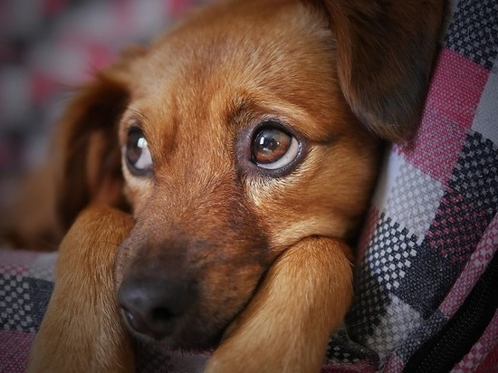 Татарстанец ответит за расстрел соседской собаки