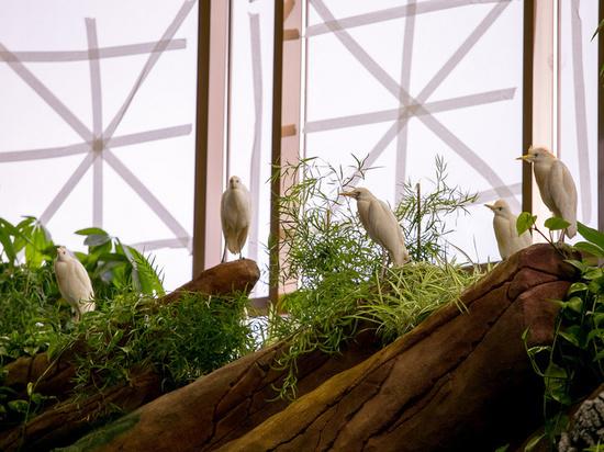 В казанском зоопарке «Река Замбези» поселились египетские цапли