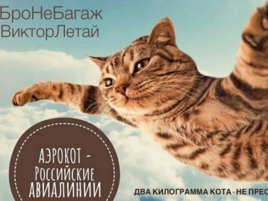 В истории с котом Виктором и Аэрофлотом увидели политическую подоплеку